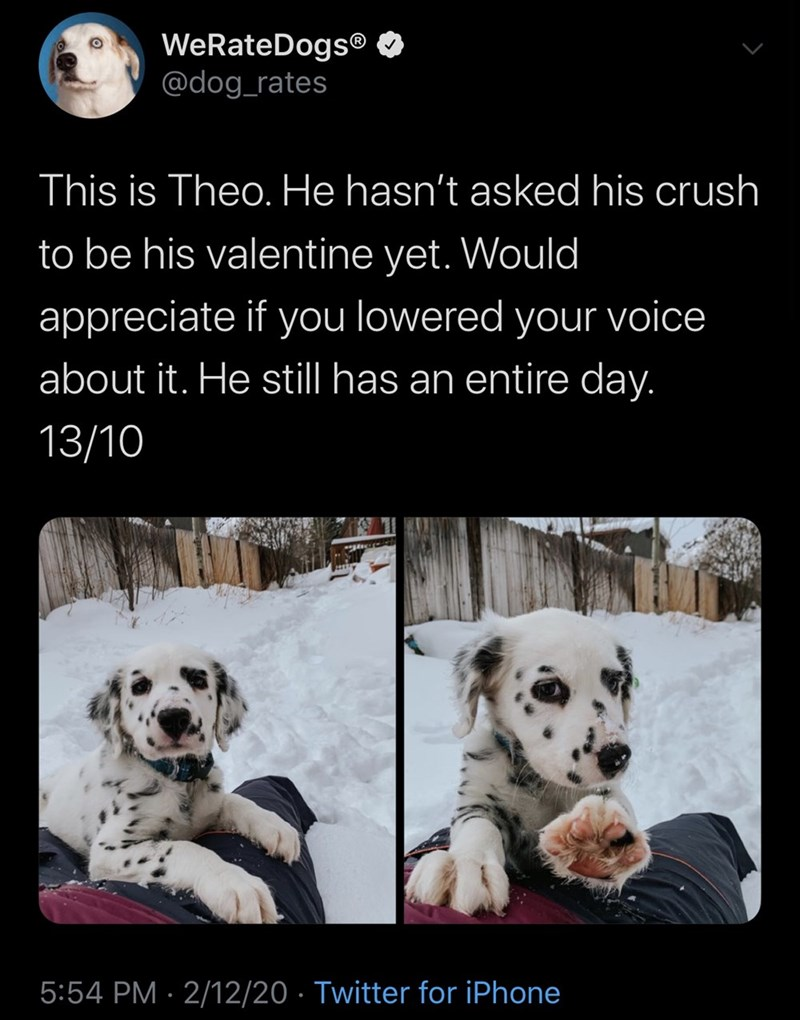 Dalmatian - WeRateDogs® O @dog_rates This is Theo. He hasn't asked his crush to be his valentine yet. Would appreciate if you lowered your voice about it. He still has an entire day. 13/10 5:54 PM · 2/12/20 · Twitter for iPhone