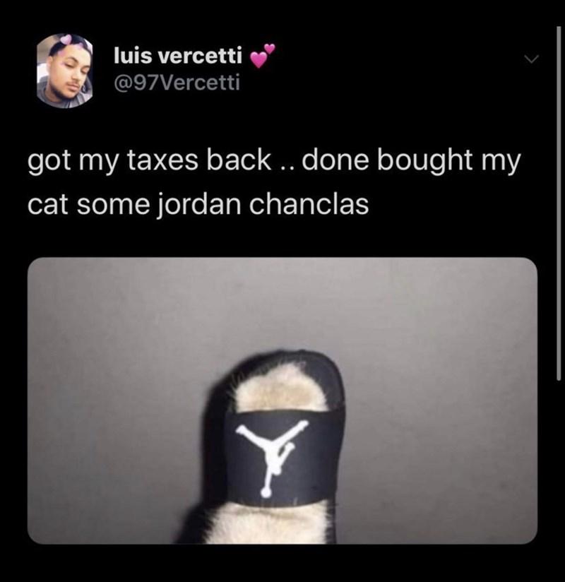 Text - luis vercetti @97Vercetti got my taxes back .. done bought my cat some jordan chanclas