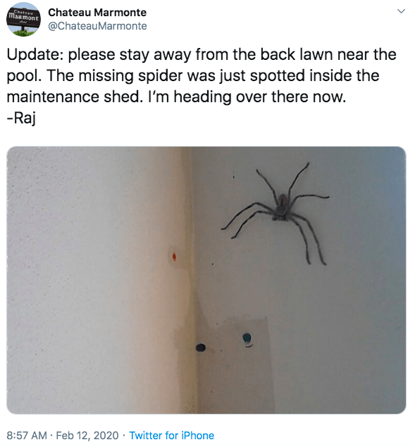 Text - Text - Chateau Marmonte MARmont @ChateauMarmonte Update: please stay away from the back lawn near the pool. The missing spider was just spotted inside the maintenance shed. I'm heading over there now. -Raj 8:57 AM Feb 12, 2020 · Twitter for iPhone