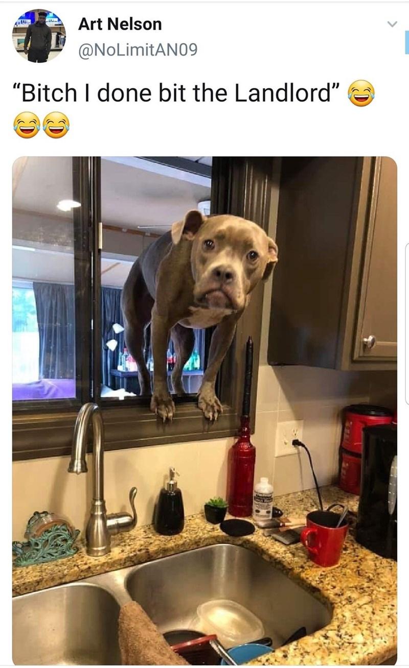 "Dog - Art Nelson @NoLimitAN09 ""Bitch I done bit the Landlord"""