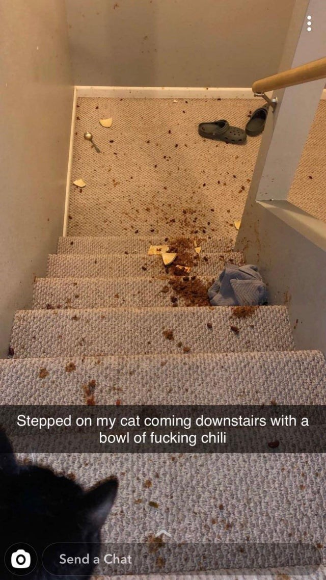 Floor - on my cat coming downstairs with a bowl of fucking chili Stepped Send a Chat