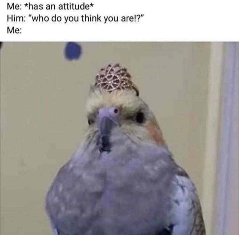 "Bird - Me: *has an attitude* Him: ""who do you think you are!?"" Me:"
