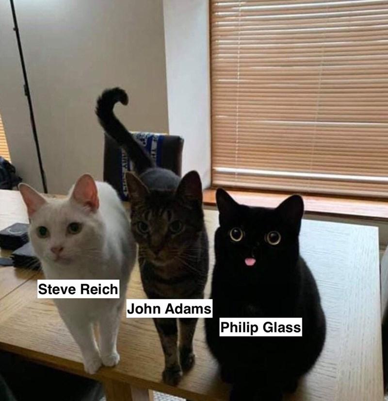 Cat - Steve Reich John Adams Philip Glass