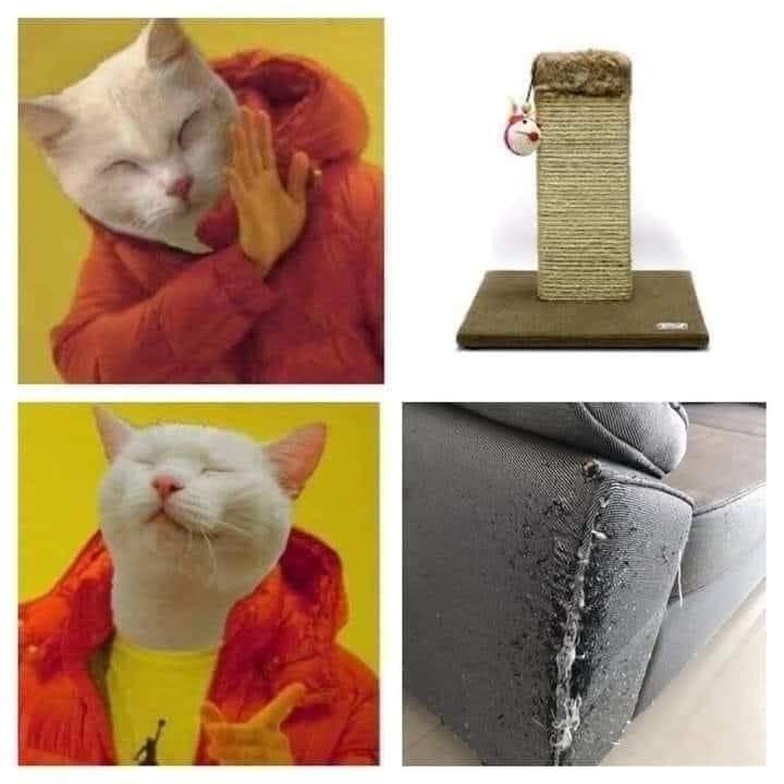cat memes - 9440776704