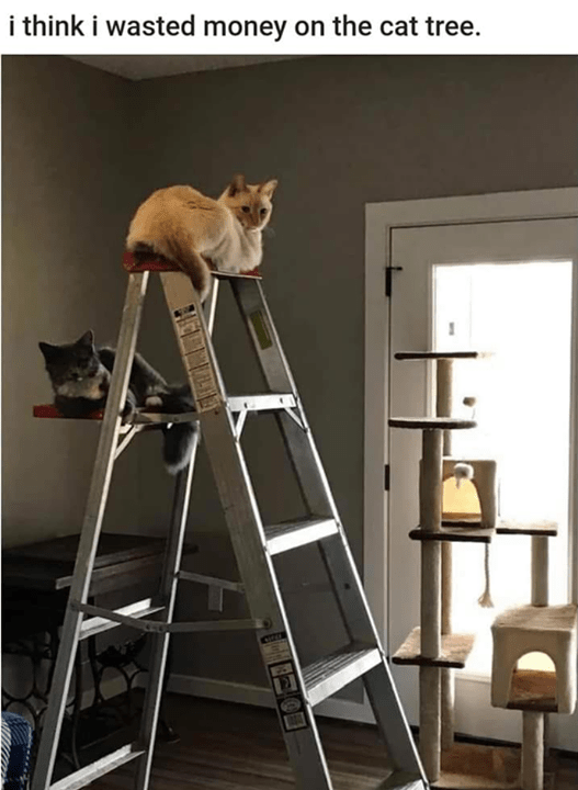 two cats one cream colored and one dark grey sitting on different steps of a step ladder while a lone cat tree stands in the background i think i wasted money on the cat tree