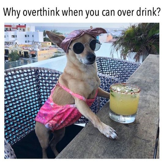 Dog - Why overthink when you can over drink?