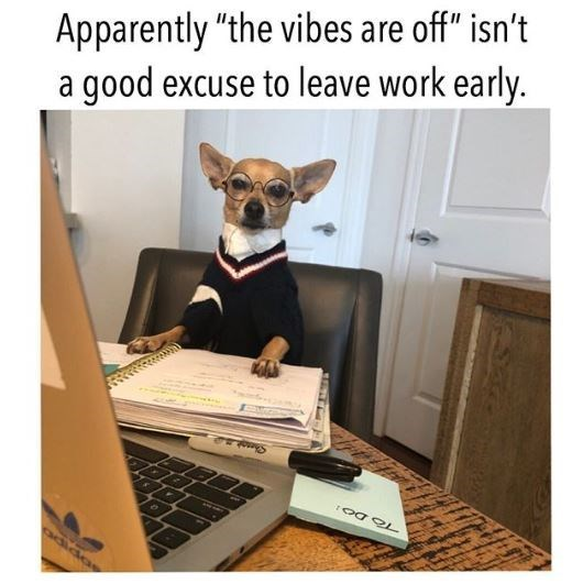 "Dog - Apparently ""the vibes are off"" isn't a good excuse to leave work early. ক TO DO1 adida"