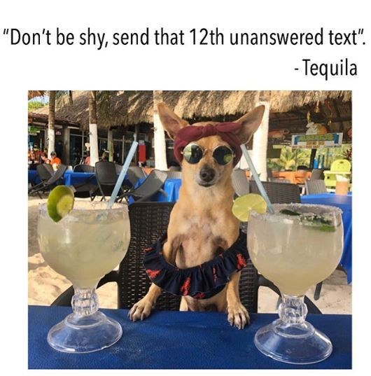 "Canidae - ""Don't be shy, send that 12th unanswered text"". - Tequila"