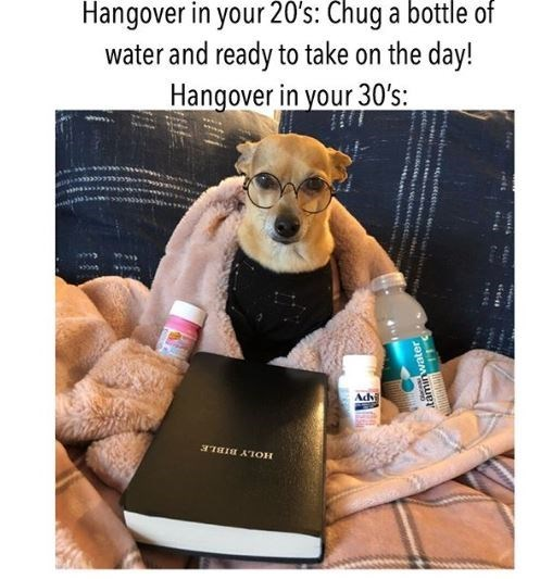 Canidae - Hangover in your 20's: Chug a bottle of water and ready to take on the day! Hangover in your 30's: Adh ITHIH AIOH taminwater