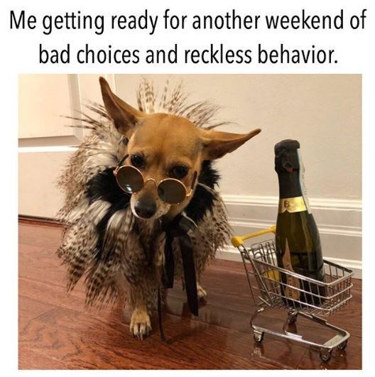 Canidae - Me getting ready for another weekend of bad choices and reckless behavior.