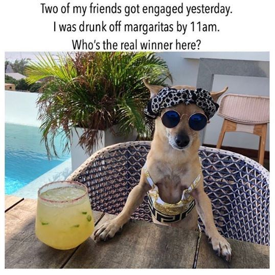 Dog - Two of my friends got engaged yesterday. I was drunk off margaritas by 11am. Who's the real winner here?