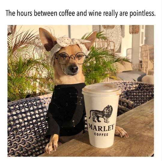 Dog - The hours between coffee and wine really are pointless. MARLEY COFFEE