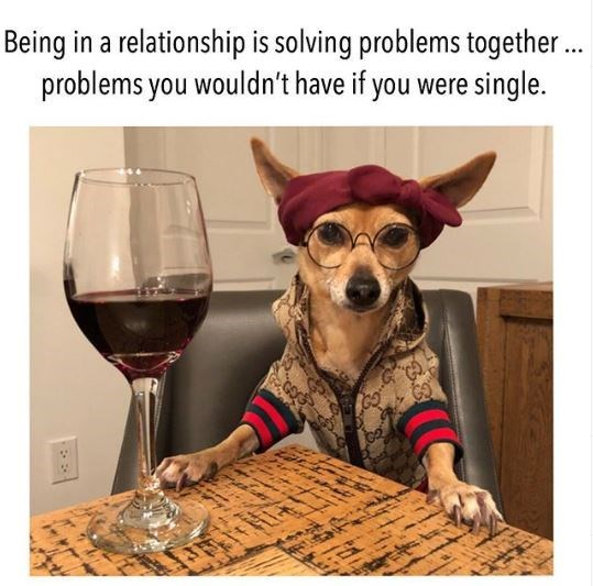 Canidae - Being in a relationship is solving problems together. problems you wouldn't have if you were single. 38
