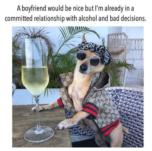 Dog - A boyfriend would be nice but I'm already in a committed relationship with alcohol and bad decisions.