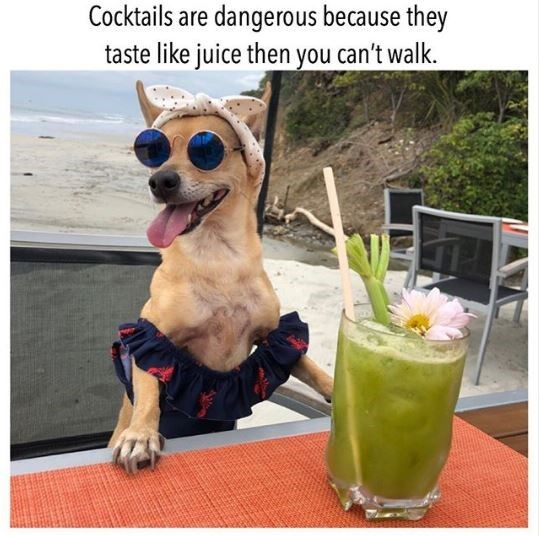 Canidae - Cocktails are dangerous because they taste like juice then you can't walk.