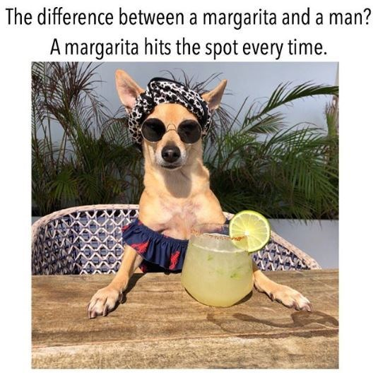 Dog - The difference between a margarita and a man? A margarita hits the spot every time.