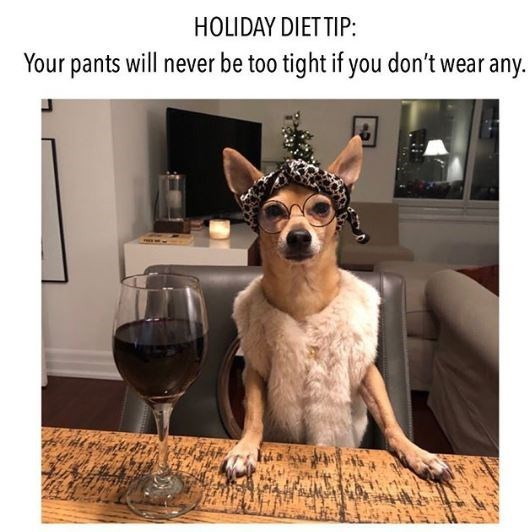 Mammal - HOLIDAY DIET TIP: Your pants will never be too tight if you don't wear any.