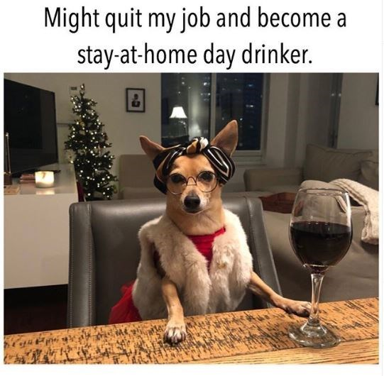Dog - Might quit my job and become a stay-at-home day drinker.