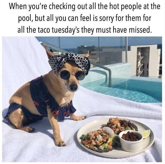 Canidae - When you're checking out all the hot people at the pool, but all you can feel is sorry for them for all the taco tuesday's they must have missed.