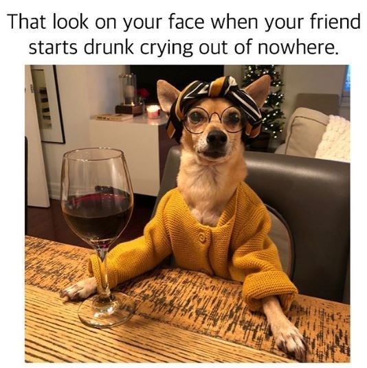 Dog - That look on your face when your friend starts drunk crying out of nowhere.