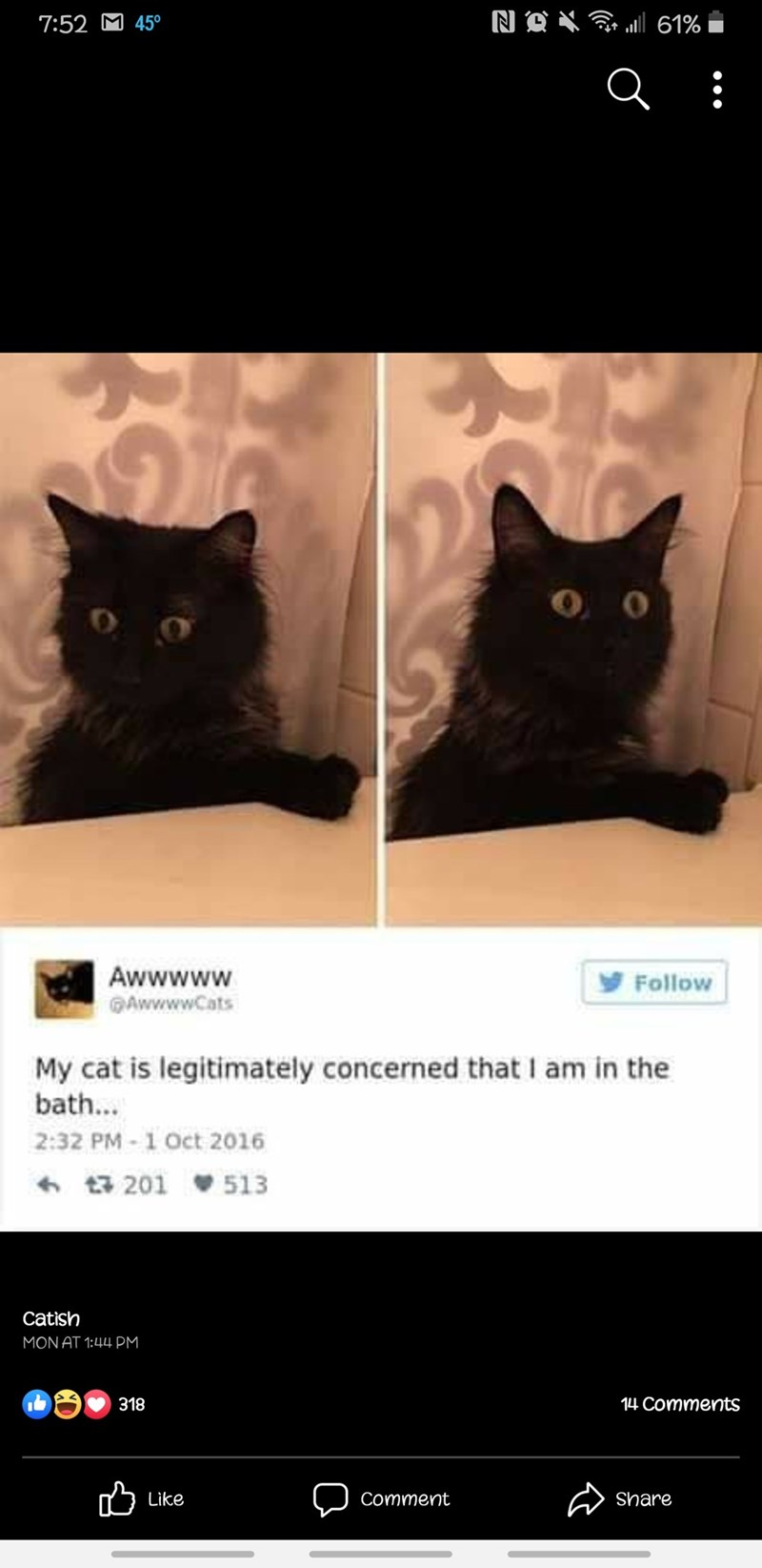 Cat - NA X G 61% 7:52 M 45° Awwwww GAwwwwCats Follow My cat is legitimately concerned that I am in the bath... 2:32 PM - 1 Oct 2016 6 17 201 513 Catish MON AT 1:44 PM 318 14 Comments Like Share Comment
