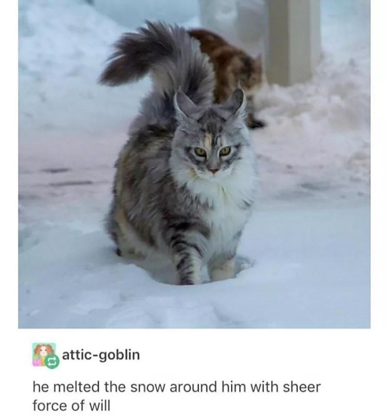 Cat - attic-goblin he melted the snow around him with sheer force of will