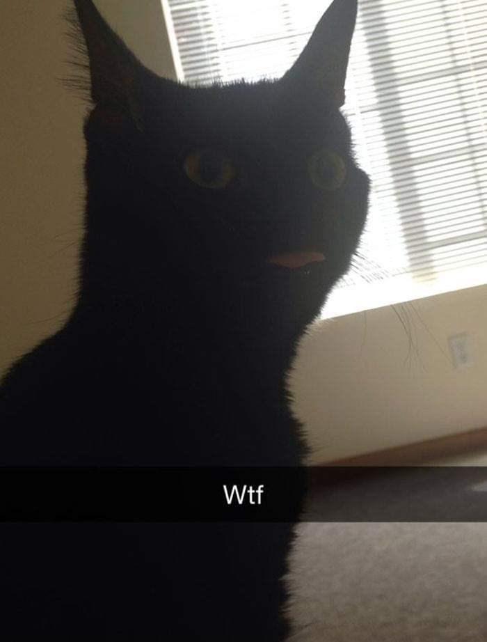 Cat - Wtf
