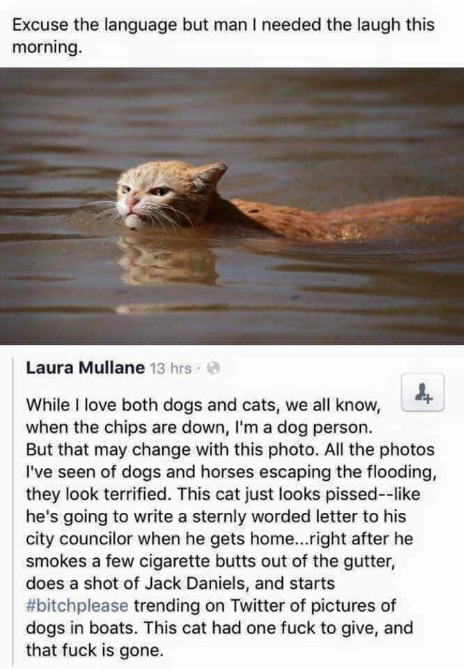Adaptation - Excuse the language but man I needed the laugh this morning. Laura Mullane 13 hrs : a While I love both dogs and cats, we all know, when the chips are down, I'm a dog person. But that may change with this photo. All the photos I've seen of dogs and horses escaping the flooding, they look terrified. This cat just looks pissed--like he's going to write a sternly worded letter to his city councilor when he gets home...right after he smokes a few cigarette butts out of the gutter, does
