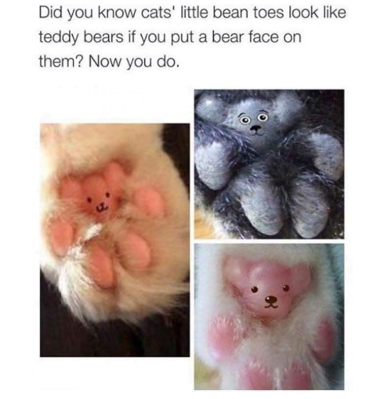Nose - Did you know cats' little bean toes look like teddy bears if you put a bear face on them? Now you do.