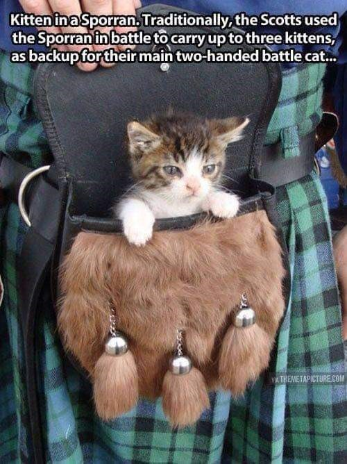 Cat - Kitten ina Sporran. Traditionally, the Scotts used the Sporran in battle to carry up to three kittens, as backup for their main two-handed battle cat. VIA THEMETAPICTURE.COM