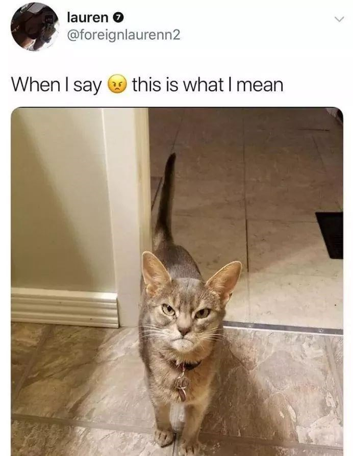 Cat - lauren O @foreignlaurenn2 When I say this is what I mean