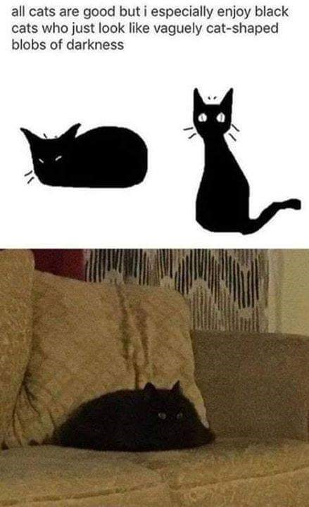 Cat - all cats are good but i especially enjoy black cats who just look like vaguely cat-shaped blobs of darkness