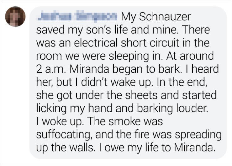 Text - J n saved my son's life and mine. There was an electrical short circuit in the room we were sleeping in. At around 2 a.m. Miranda began to bark. I heard her, but I didn't wake up. In the end, she got under the sheets and started licking my hand and barking louder. I woke up. The smoke was suffocating, and the fire was spreading up the walls. I owe my life to Miranda. Y* My Schnauzer