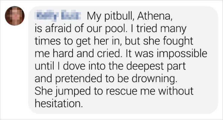 Text - y lir My pitbull, Athena, is afraid of our pool. I tried many times to get her in, but she fought me hard and cried. It was impossible until I dove into the deepest part and pretended to be drowning. She jumped to rescue me without hesitation.