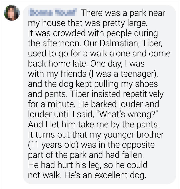 """Text - There was a park near my house that was pretty large. It was crowded with people during the afternoon. Our Dalmatian, Tiber, used to go for a walk alone and come back home late. One day, I was with my friends (I was a teenager), and the dog kept pulling my shoes and pants. Tiber insisted repetitively for a minute. He barked louder and louder until I said, """"What's wrong?"""" And I let him take me by the pants. It turns out that my younger brother (11 years old) was in the opposite part of the"""