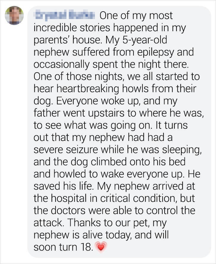Text - THWH One of my most incredible stories happened in my parents' house. My 5-year-old nephew suffered from epilepsy and occasionally spent the night there. One of those nights, we all started to hear heartbreaking howls from their dog. Everyone woke up, and my father went upstairs to where he was, to see what was going on. It turns out that my nephew had had a severe seizure while he was sleeping, and the dog climbed onto his bed and howled to wake everyone up. He saved his life. My nephew