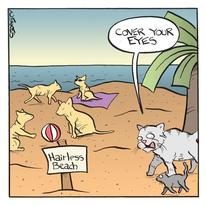 Cartoon - COVER YOUR EYES Hairless Beach WFAKES