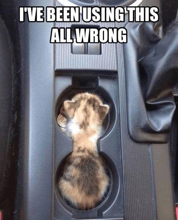 i've been using this all wrong pic of a kitten in the cup holder between the front seats in a car