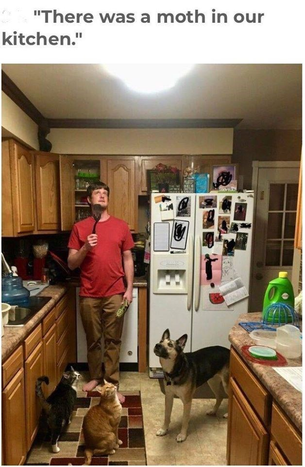there was a moth in our kitchen photo of a man in a red shirt holding a spatula, a dog and two cats all standing in a kitchen and looking up at the ceiling