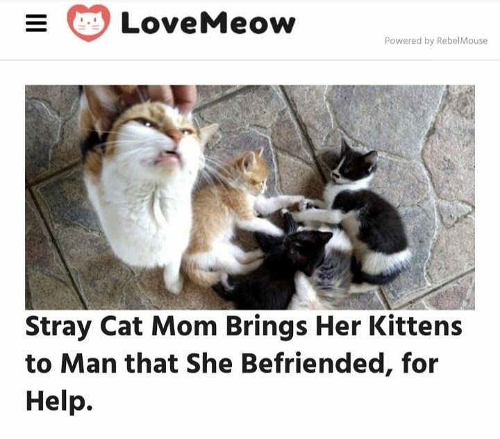 Photo caption - LoveMeow Powered by RebelMouse Stray Cat Mom Brings Her Kittens to Man that She Befriended, for Help. II
