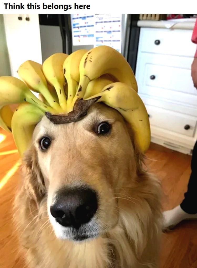 Dog - Think this belongs here