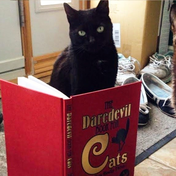 Cat - THL Daredevil BOOK FOR Can Jats Tstty Tuaa An Darcacvin M Cals