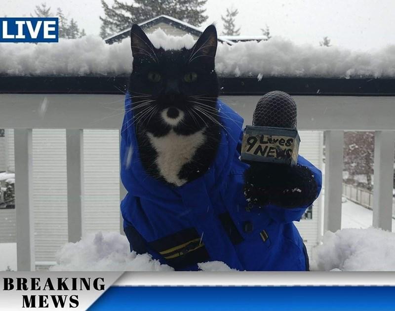 Cat - LIVE Lives INEYS BREAKING MEWS