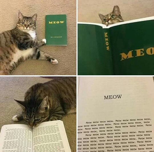 Cat - MEOW MEOW Meow meow meow meow. Meow meoW meow meow meow, neow meow meow meow neow. Meo meow meow meow, meow eow. Meow meow meow neow. MeOw meow meow meow. Meow seow meow neow, neow neow meow. Meow meow meow meow meOW meow meow. Meow meow eow meow meOW meow. Meow neow neow meow meow meow eow meow meOw, meow meoW meow neow meow. Meow meow eow meow meow meow meow meow meow meow. Meow meow POw meow meOW meow meow. Meow meow meow, neow meow meoy neow. Meow meow meow meow meow meow MEOW