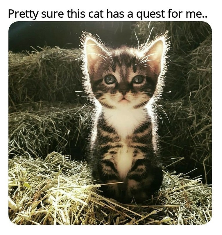 Cat - Pretty sure this cat has a quest for me..