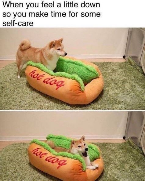 Canidae - When you feel a little down so you make time for some self-care hot dog hot dog