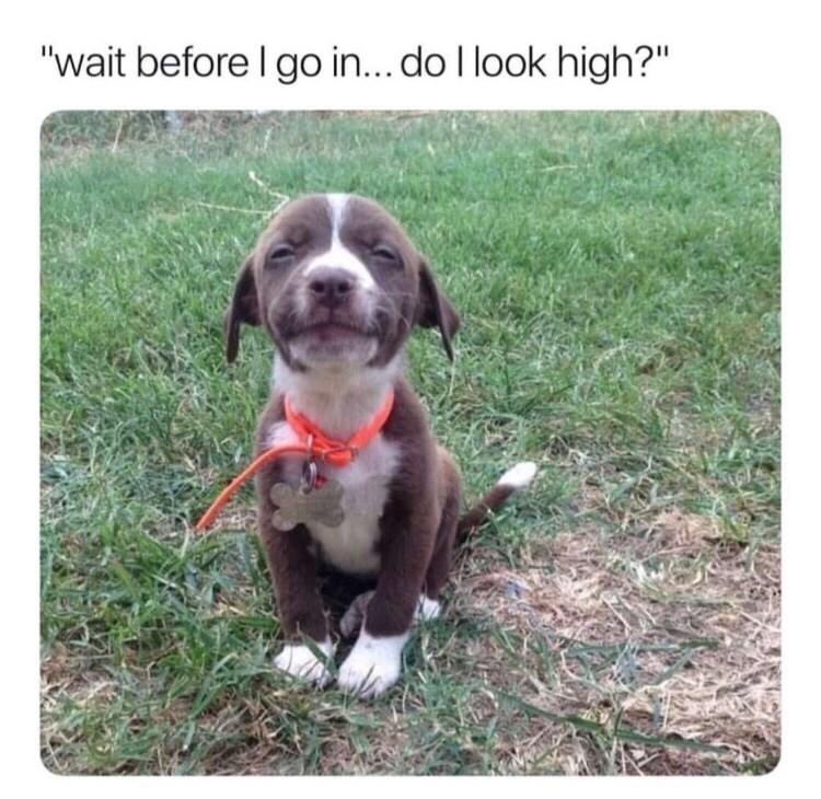"""Dog - """"wait before I go in... do I look high?"""""""