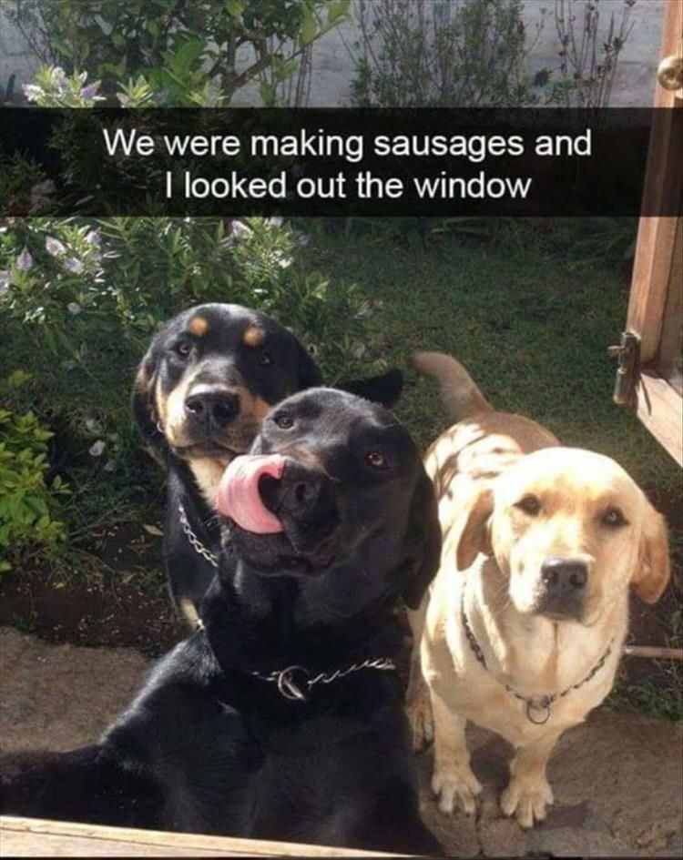Dog - We were making sausages and I looked out the window