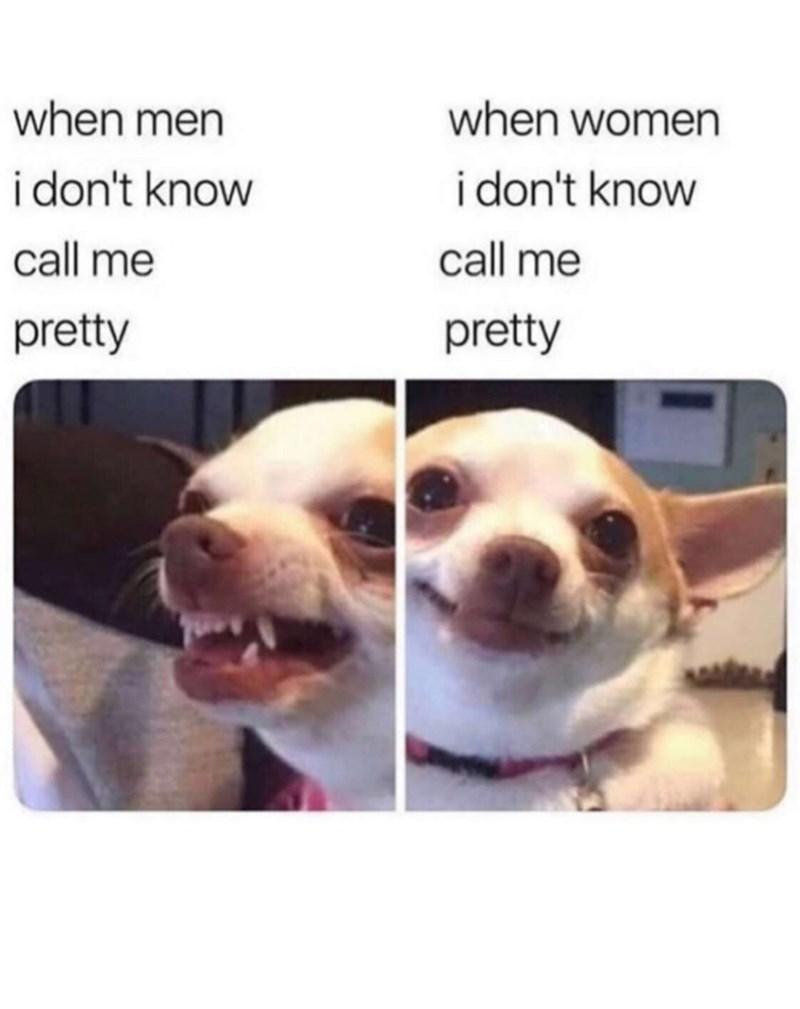 Dog - when men when women i don't know i don't know call me call me pretty pretty