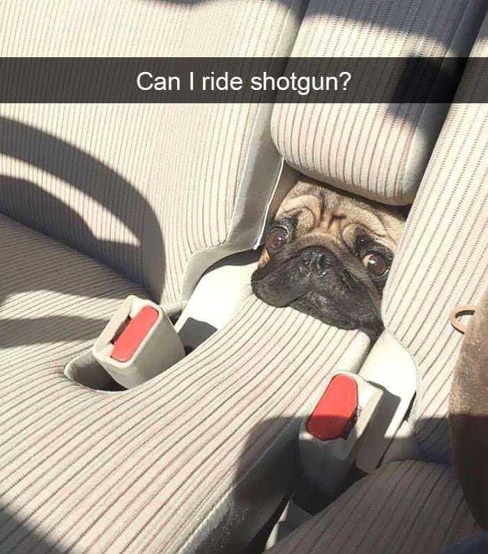Car seat - Can I ride shotgun?